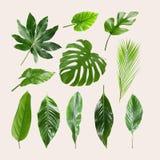 Set różni tropikalni liście zdjęcia royalty free