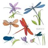 Set różnorodni dragonflies w różnych pozach Kolorowa ręka rysujący inkasowy latający adder również zwrócić corel ilustracji wekto ilustracji