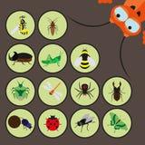 Set różnorodni insekty ilustracji