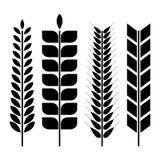 Set różnorodni pszeniczni spikelets, wektorowa ilustracja ilustracji