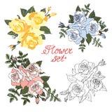 Set 4 róży Obrazy Royalty Free