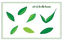 Set ręka rysujący liście ilustracja wektor