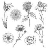 Set ręka rysujący nakreślenie kwiaty Fotografia Stock