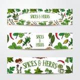 Set ręka rysujący sztandarów szablony z pikantność i ziele Obraz Stock