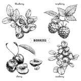 Set ręki rysować jagody odizolowywać na białym tle Malinka, czarna jagoda, wiśnia, brusznica na białym tle ilustracja wektor