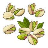 Set ręki rysować pistacjowe dokrętki, pojedynczy i zgrupowany ilustracji