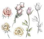 Set ręki rysować róże kwiatów ilustraci wektor ilustracji