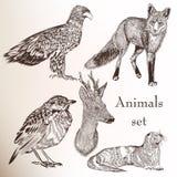 Set ręki rysujący zwierzęta Zdjęcie Royalty Free