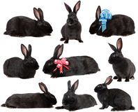 Set  rabbits. Set black rabbits on a white background, is isolated Royalty Free Stock Photo