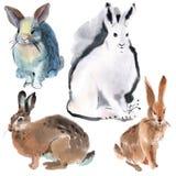 Set of rabbits Stock Photo