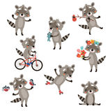 Set raccoons Stock Images