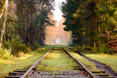 Set of railroad tracks in dense pine forest. Set of old railroad tracks with moss covered wooden ties extending into the distance in dense hardwood forest with Stock Photo