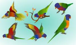 Set of rainbow parrots Royalty Free Stock Photo