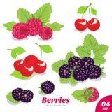 Set of raspberry, cherry and blackberry Stock Image