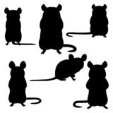 Set of rat silhouettes on white. Background, front and side view royalty free illustration