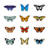 Set of realistc butterfly Stock Photo