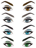 Set of realistic cartoon vector female eyes and eyebrows Stock Images