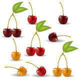 A set of realistic cherries with cuttings and leaves. Berries are grouped by two Royalty Free Stock Image