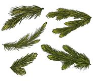 Set of Realistic Detailed Christmas tree branches. Symbol of Christmas and New Year isolated on white background. Vector illustrat. Ion Royalty Free Stock Photo