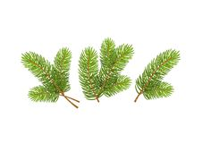 Set of Realistic Detailed Christmas tree branches Symbol of New Year on white background. Set of Realistic Detailed Christmas tree branches Symbol of New Year stock illustration