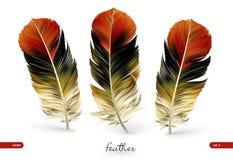 Set of realistic feathers -  illustration. Isolated on white background stock illustration