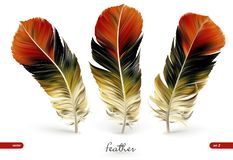 Set of realistic feathers - vector illustration. Isolated on white background stock illustration