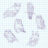 Set of realistic owls on a tetrad sheet Stock Image