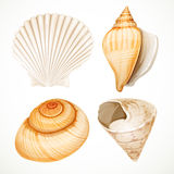 Set realistic seashells Stock Image