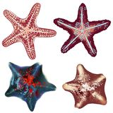 Set of realistic starfishes for design royalty free stock photo