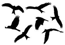 Set of realistic vector illustrations of silhouettes of flying b. Irds of prey isolated on white background Stock Image