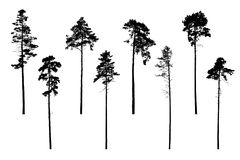 Set of realistic vector silhouettes of coniferous trees - isolated. On white background vector illustration