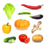 Set realistisches Gemüse Stockfotografie