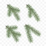 Set realistyczne jedlinowe gałąź Choinka lub sosna Conifer gałęziasty symbol boże narodzenia i nowy rok odizolowywający na przejr royalty ilustracja