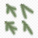 Set realistyczne jedlinowe gałąź Wakacyjni ozdobni elementy Choinka lub sosna Conifer gałęziasty symbol boże narodzenia i nowy ro royalty ilustracja