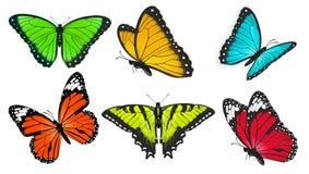Set realistyczni, jaskrawi i kolorowi motyle, motyli wektor ilustracji