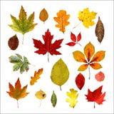 Set realistyczni jesień liście Niski poli- styl pojedynczy bia?e t?o r?wnie? zwr?ci? corel ilustracji wektora obrazy stock