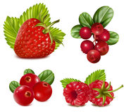Set of red berries with leaves. Stock Photography