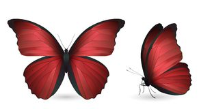Set of butterflies isolated on white background. Set of red butterflies isolated on a white background. Realistic 3D illustration stock illustration