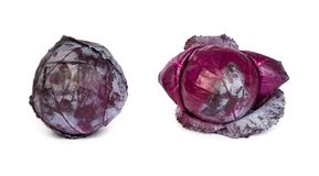 Set of Red cabbage on white background. Royalty Free Stock Image