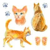 Set with red cat on white background. stock photo