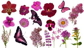 Set of red color butterflies and flowers Royalty Free Stock Photography