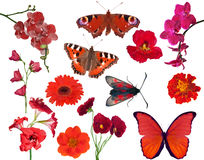 Set of red color flowers and butterflies isolated on white Royalty Free Stock Images