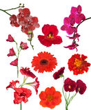 Set of nine red color flowers isolated on white Royalty Free Stock Image