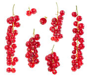 Set of red currants Stock Image