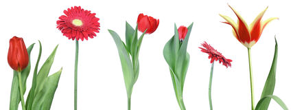 Set of red flowers Royalty Free Stock Image