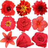 The set of Red Flowers Stock Images