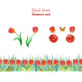 Set of red flowers. Poppies, tulips and green grass. Seamless floral border. stock illustration