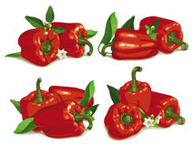 Set of red pepper Stock Photo