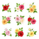 Set of red, pink, white, yellow and orange roses. Vector illustration. Royalty Free Stock Photography