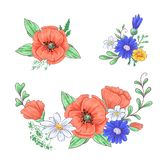 Set of red poppies and daisies. Hand drawing. Vector illustration.  vector illustration